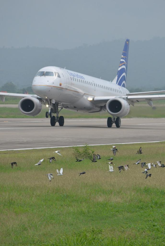 aviario1